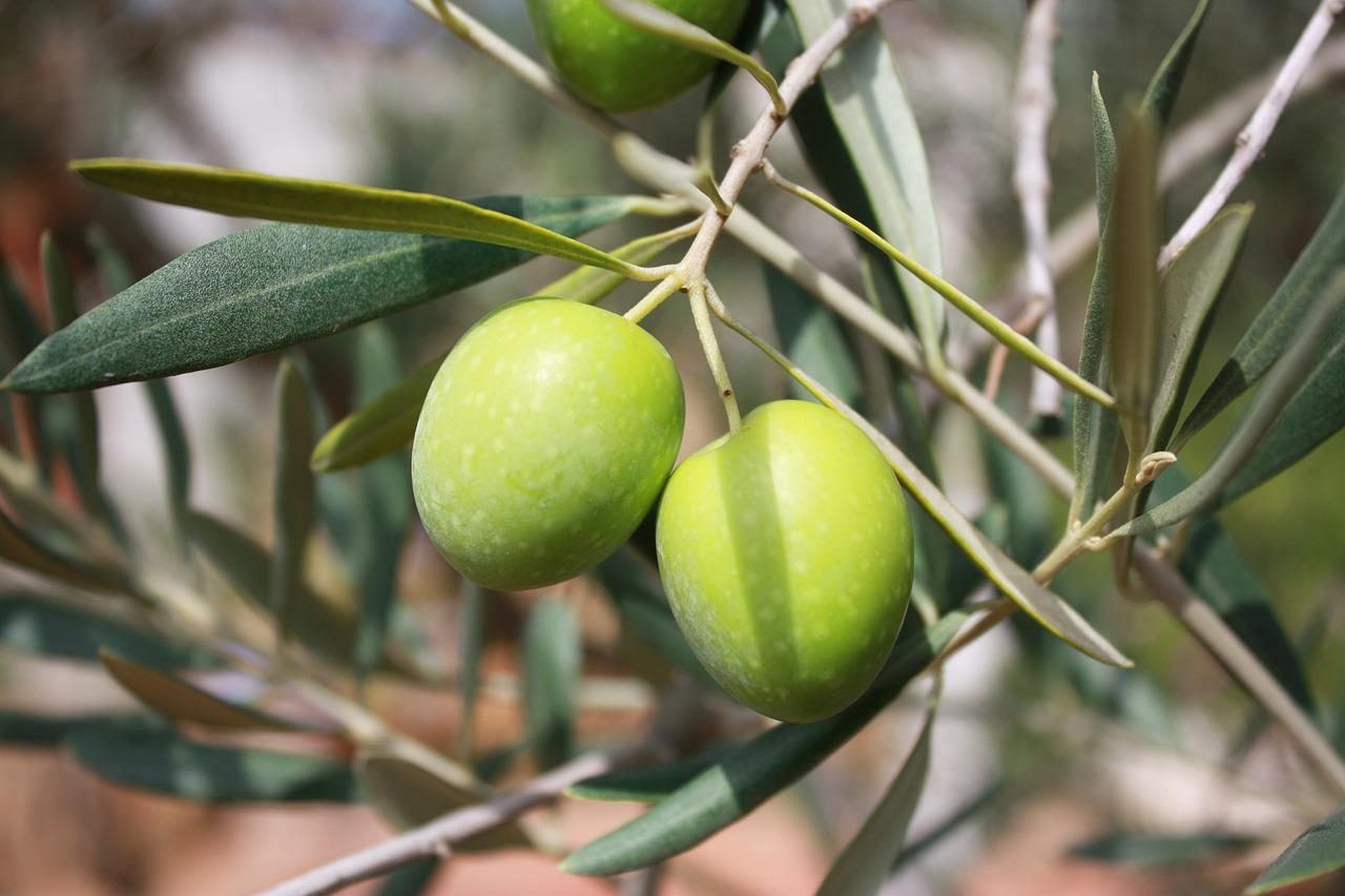 Agricoltura biologica Olio