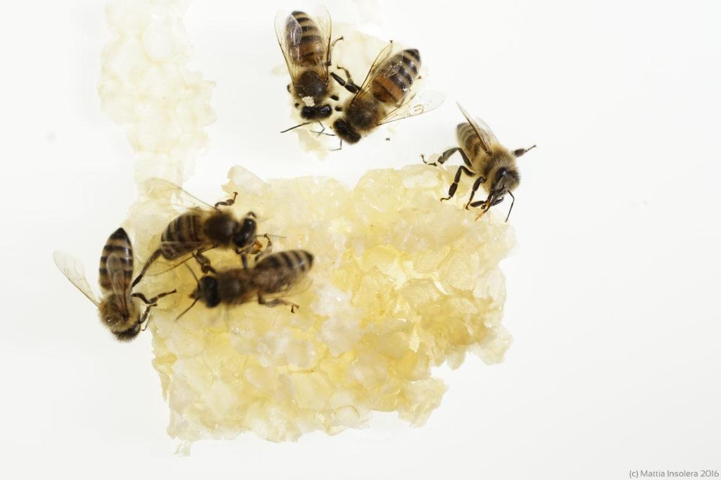 apicolturamiele