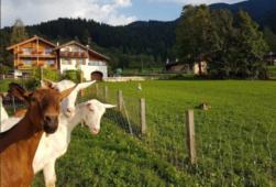 latte capra